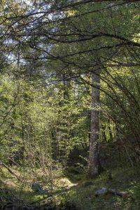 piccolo scorcio del bosco che si attraversa lungo il tragitto, sentiero dei Pintareni