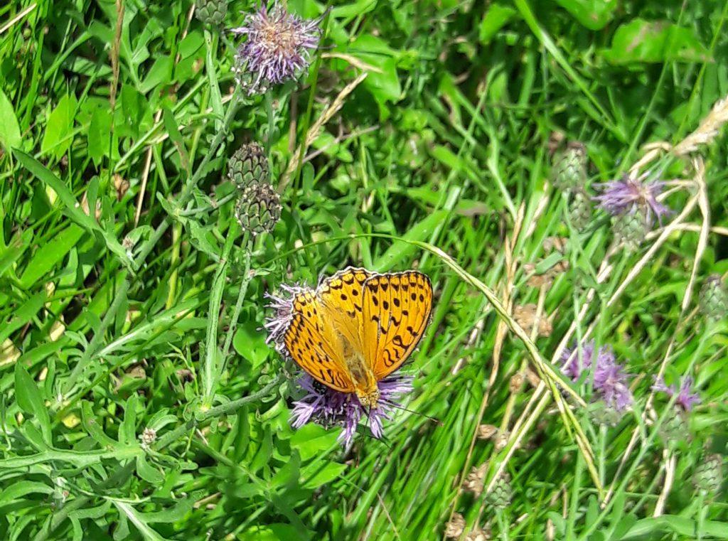 farfalle Cascate rio Paraiso Breonio